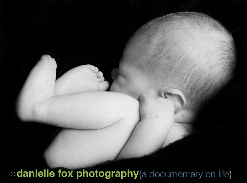 Newborn charlee danielle fox photography