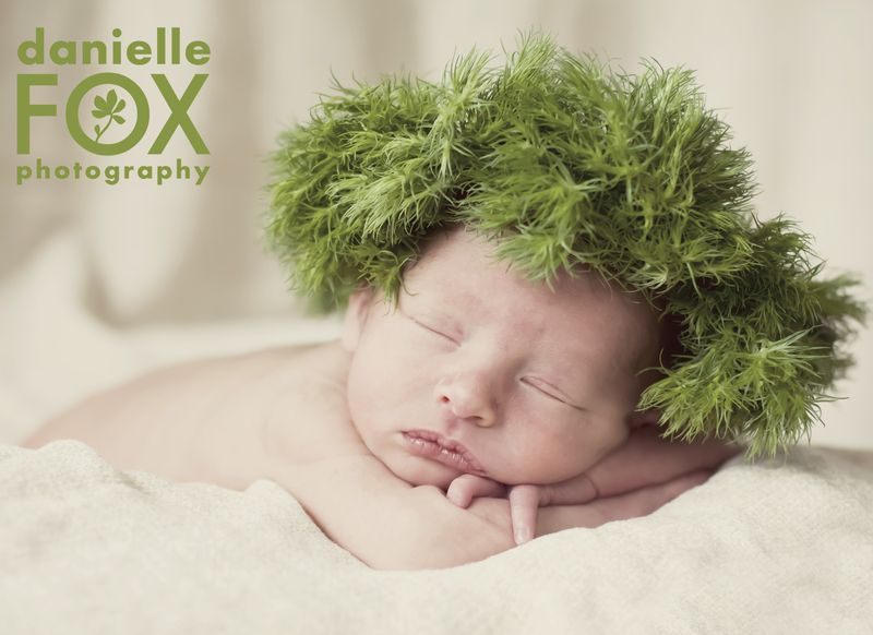 New born baby photography in des moines